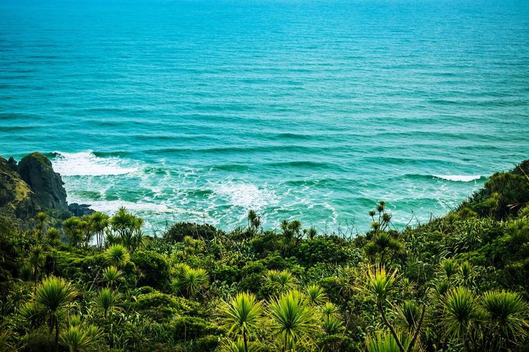 Sea Nature Water High Angle View Beauty In Nature No People Beach Day Outdoors Scenics Growth Tranquility Blue Green Color Plant Tree Wave Palm Tree Horizon Over Water Animal Themes Nature Freshness EyeEmNewHere Focus On Foreground Landscape EyeEmNewHere Breathing Space Investing In Quality Of Life