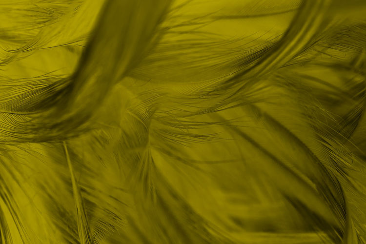Green Color Close-up No People Plant Backgrounds Full Frame Nature Growth Beauty In Nature Textured  Palm Tree Leaf Yellow Pattern Feather  Plant Part Softness Environment Day Natural Pattern Palm Leaf Wind