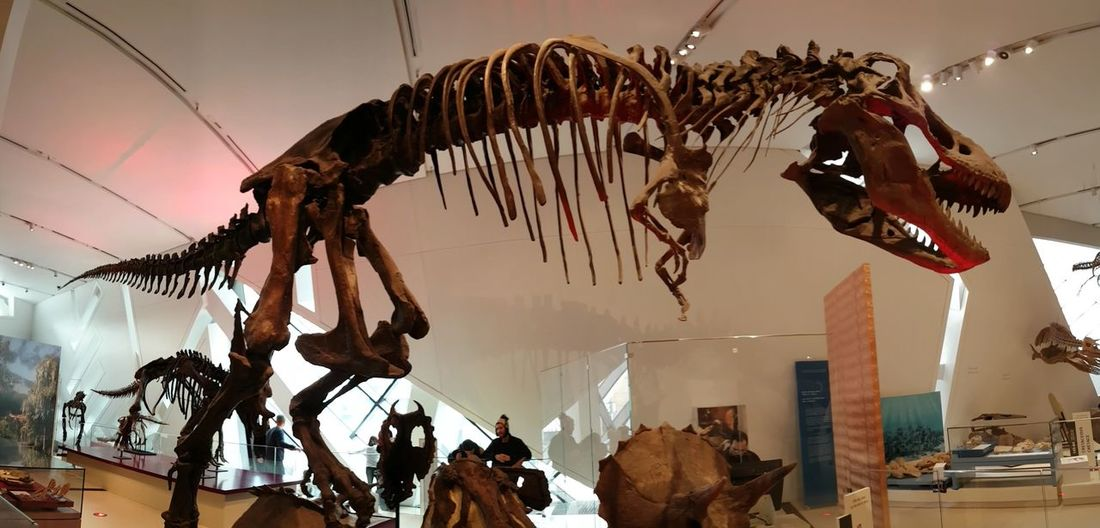 Outdoors People Adult Day Toronto Canada Royal Ontario Museum T Rex Attack