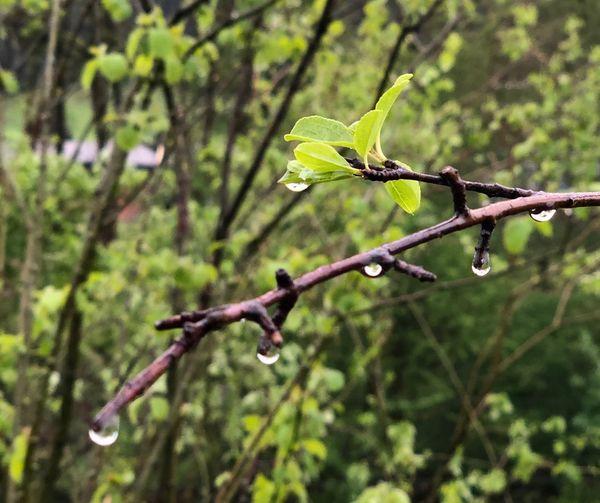 Regen die Natur freut sich !