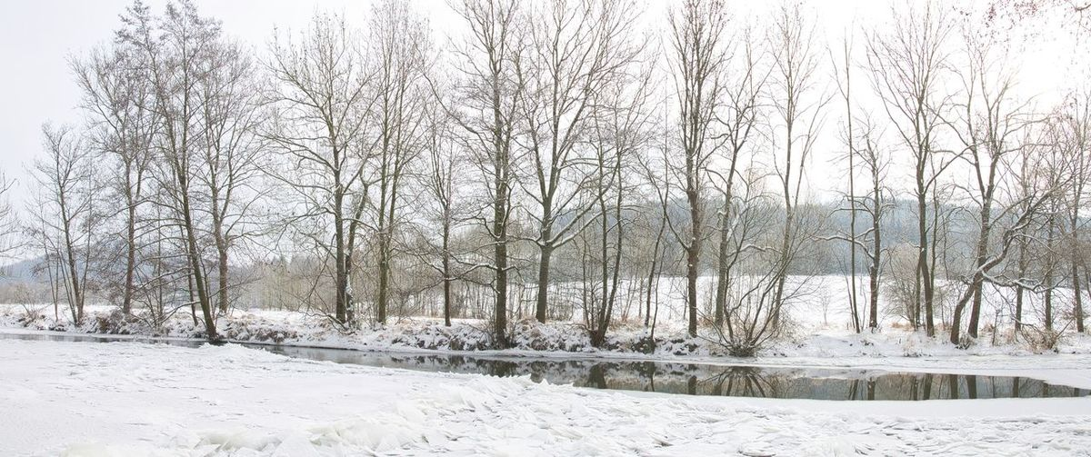 Bare trees on snow covered field