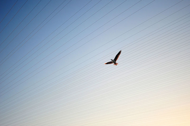 Low Angle View Of Seagull Flying Over Cables Against Sky
