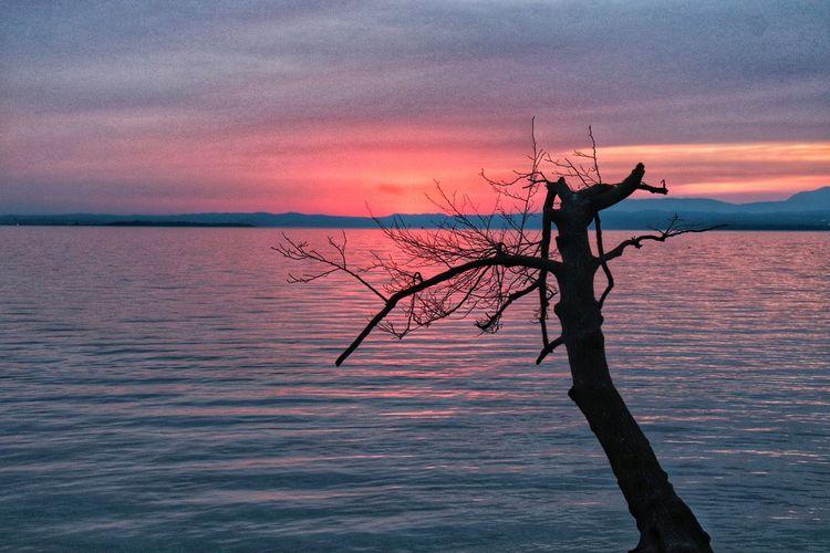 tramonto Italy Lagoon Water Lake Lake Garda Lake Lazise Pink Plant Pinklake Sera Nature Photography Nature EyeEmNewHere