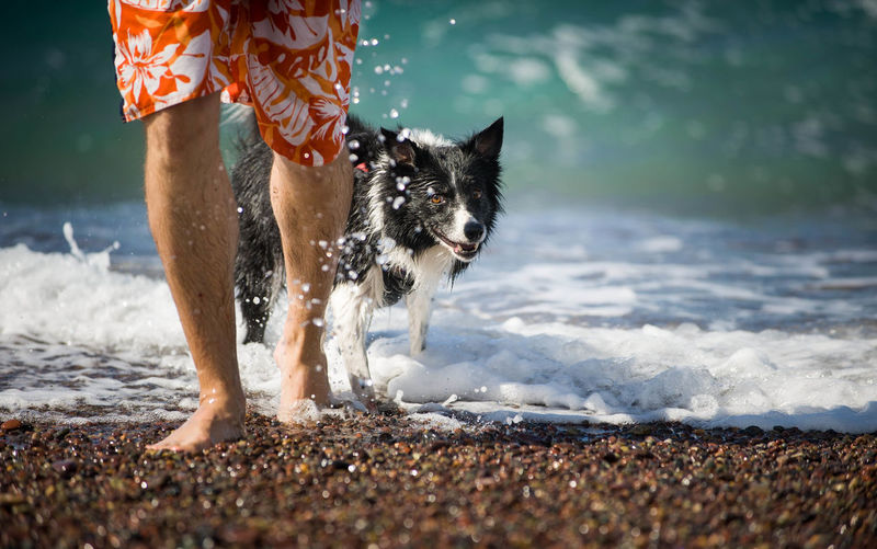 Low section of person with dog standing at beach