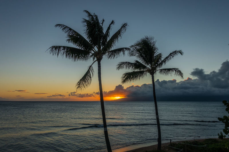 Sunset and palm trees on Maui, Hawaii. Hawaii Maui Beach Beauty In Nature Day Horizon Over Water Idyllic Landscape Nature No People Ocean Outdoors Palm Tree Scenics Sea Sea And Sky Silhouette Sky Sun Sunset Tranquil Scene Tranquility Tree Tree Trunk Water