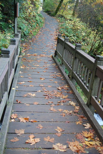 Autumn Change Day Diminishing Perspective Empty Fallen Falling Growth Leaf Leaves Narrow Nature No People Outdoors Plant Season  Surface Level The Way Forward Tranquility Tree Vanishing Point Walkway