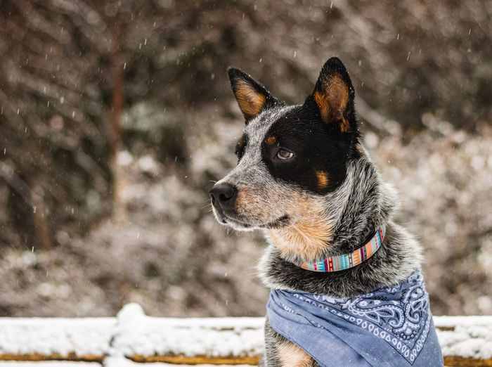 One Animal Pets Domestic Animals Mammal Domestic Animal Animal Themes Looking Away Winter Focus On Foreground Cold Temperature Looking Day No People Dog Vertebrate Snow Nature Canine Animal Head