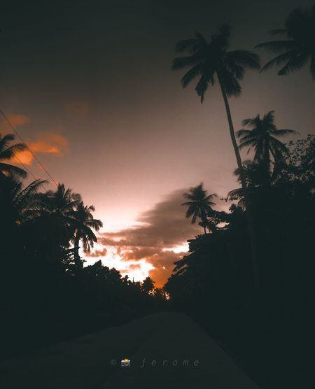 Tree Palm Tree Plant Tropical Climate Sky Sunset Silhouette Scenics - Nature Beauty In Nature Orange Color Tranquility Cloud - Sky Outdoors