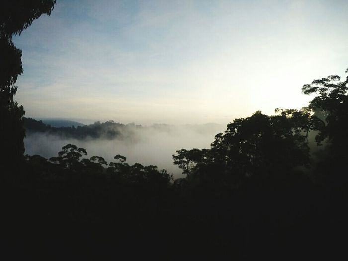 Canopy at sunrise First Eyeem Photo