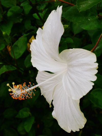 My Bst Click .... Flower Petal Freshness Close-up White Color Nature Blossom In Bloom Selective Focus Springtime