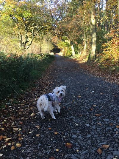 Morkie Darcie WoodLand Beauty In Nature Outdoors Autumn Tranquil Scene Morning Walk
