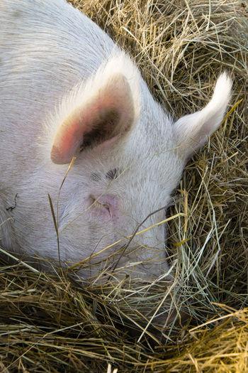 High angle view of animal resting