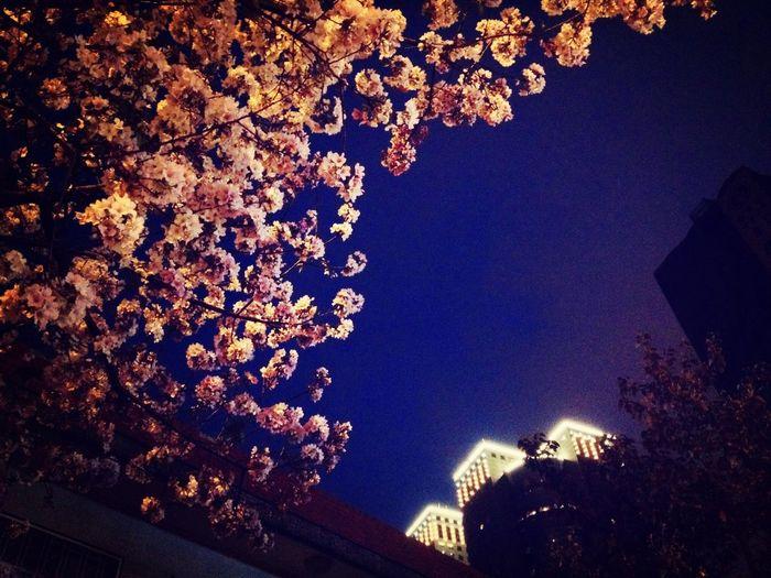 Pantone Colors By GIZMON Night,sky,lights and flowers. Isn't this good enough? Eye4enchanting Taking Photos Enjoying Life Nightphotography EyeEmBestPics