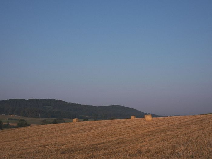 Scenic view of field against clear sky