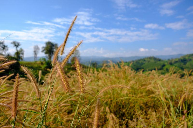 In a grass