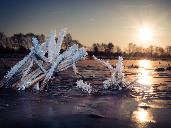 Agriculture Beauty In Nature Cold Temperature Dawn Day Focus On Foreground Frost Frozen Lake Golden Hour I Ice Crystals Lake Macro Nature No People Outdoors Reflection Scenics Snow Sunrise Tranquil Scene Tranquility Tranquility Treeline Winter