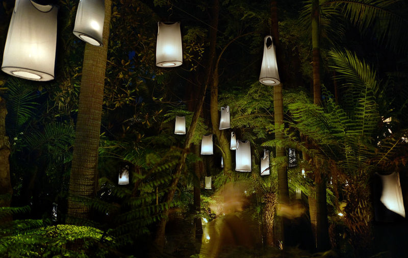 Decoration Ferns Fire Gardens Floating Garden Lights Glowing Hanging Illuminated Lantern Melbourne Night No People Tree Vests