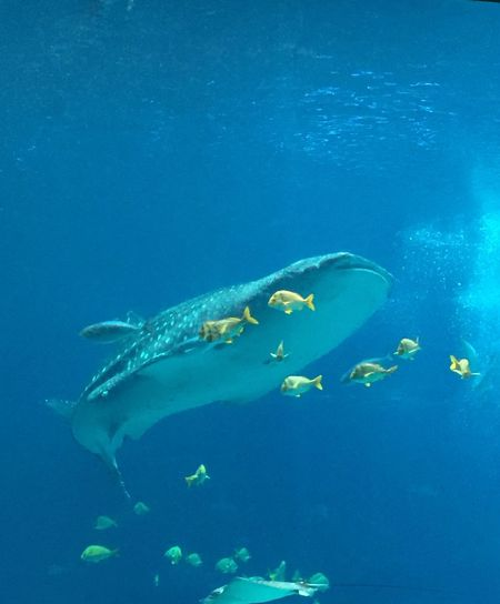 whale shark and friends Atlanta, Georgia Aquarium First Eyeem Photo