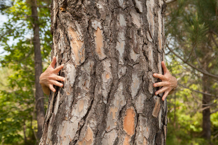 Person embracing tree trunk