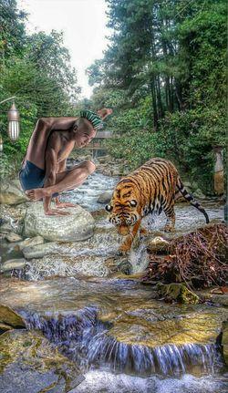 Zen. EyeEm Nature Lover Animal_collection EyeEm Best Edits The Calmness Within