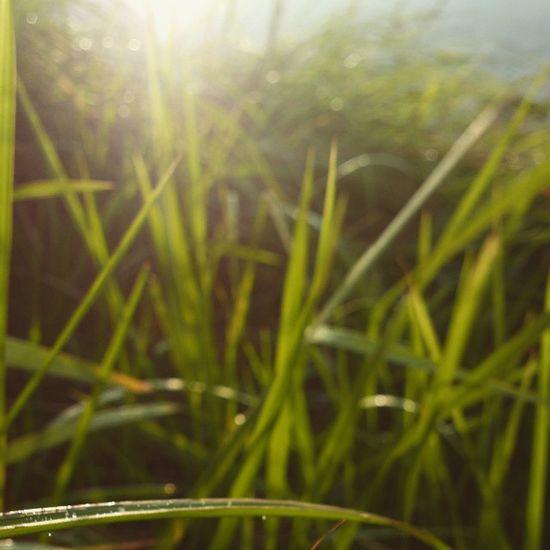 Greenery Scenery. Nature Nokia808 Broga Dew