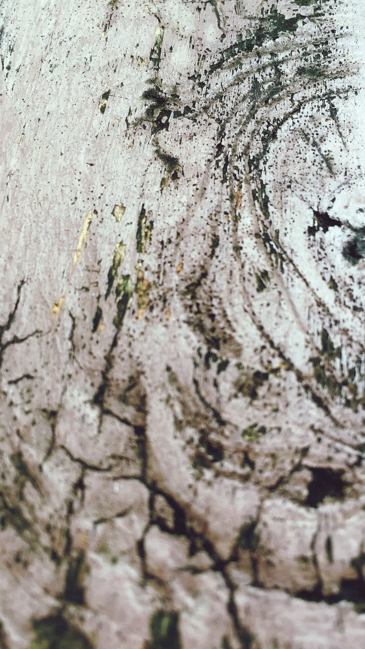 textured, close-up, tree trunk, no people, day, full frame, backgrounds, tree, animals in the wild, outdoors, nature, animal themes