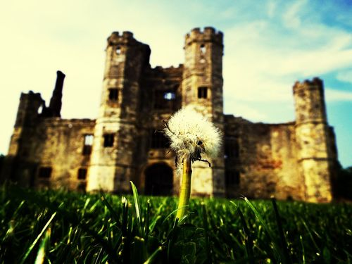 pretty dandelion seeds in the abbey grounds. Relaxing Dandelion Seeds Danfelion Flower Nature Abbey Ruins Herritage Castle Grass Sky First Eyeem Photo England English Countryside England🇬🇧 Titchfield Abbey Titchfield In Engand South Coast Southampton Southampton Uk Southampton England