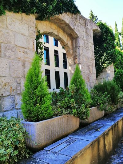 Arc Architecture_collection Architecture Architectural Detail Stone Wall The Week on EyeEm Tree Ivy Architecture Building Exterior Built Structure Plant Sky Window Box Stone Wall Arch