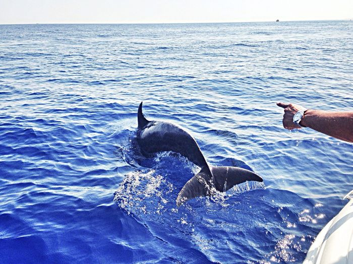 Playing with dolphins)) ??? Enjoying Life Swimming Quality Time Picoftheday