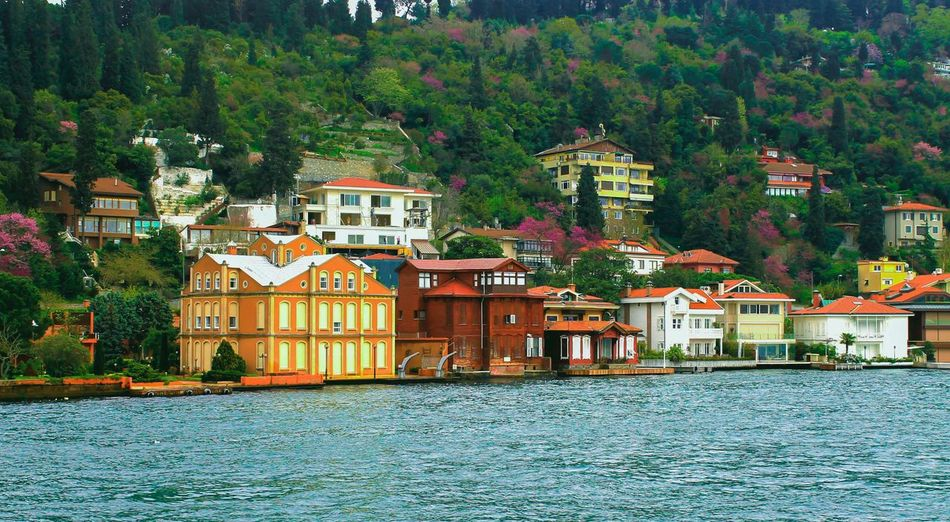 Cityscapes Landscape Spring Bosphorus EyeEm Gallery Relaxing Hello World Erguvan / Judas Tree