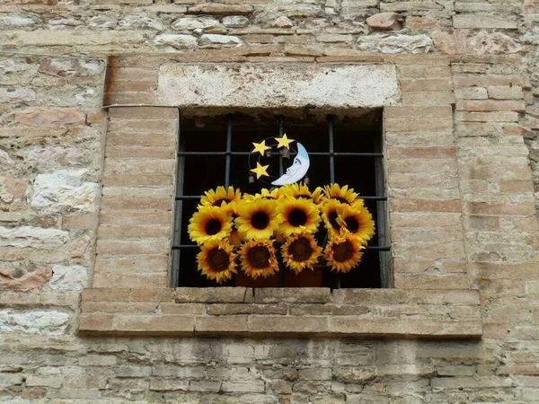 Flowers Assisi Architecture Relaxing