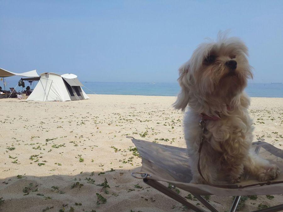 우유♡ She So Cute Puppy Pet Photography  Love Check This Out Camping Surfing Holiday