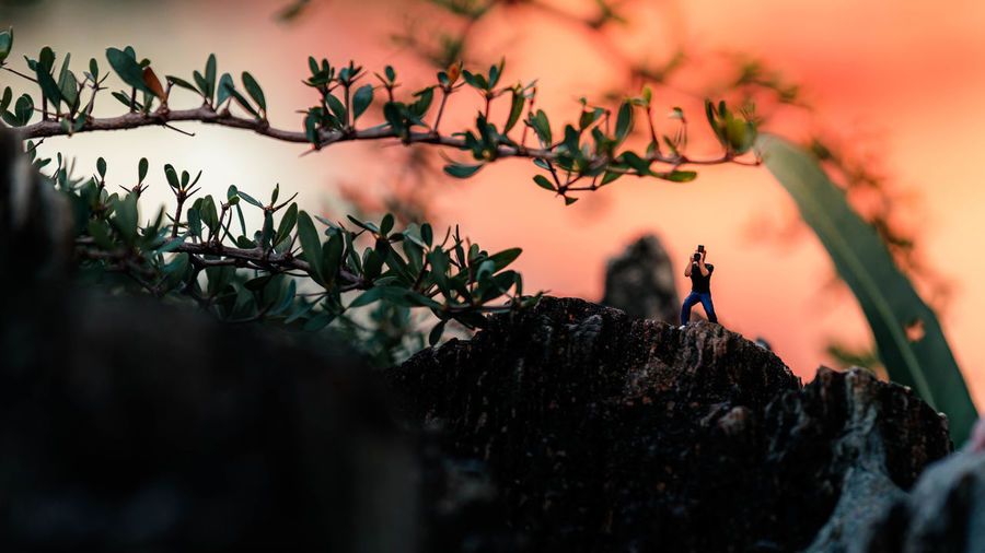 Close-up of plants growing on rock against sky during sunset
