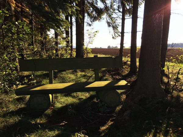 Having found a place to rest. Nature Natural Resting Benches Fichtelgebirge