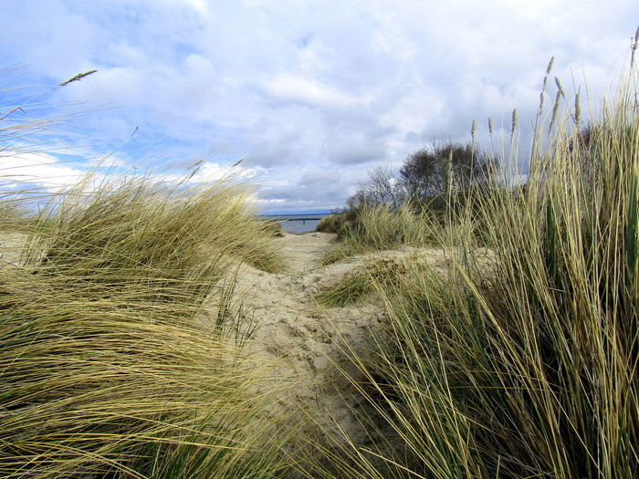 2017 Rostock-Warnemünde Am Ostseestrand-- At The Baltic Sea Beauty In Nature Grass Outdoors Sand Dune