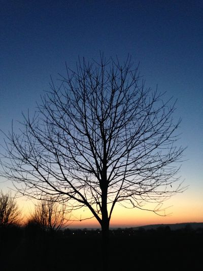 Bare Tree Beauty In Nature Branch Day Idyllic Nature No People Outdoors Scenics Silhouette Sky Sunset Tranquil Scene Tranquility Tree
