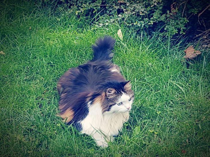 Cat♡ Catlovers