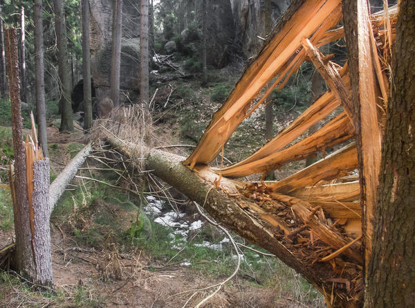 Fallen Tree Luck Storm Calamity Damaged Forest Insurance Log Lucky To Be Alive Natural Calamities Nature No People Non-urban Scene Splintered Splintered Trees Splinteredwood Timber Tree Tree Trunk Trunk Wind Wind Damage Wood Wood - Material WoodLand