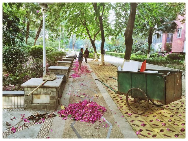 China China Photos Colors Flower Petals On The Floor Foshan Guangdong Outdoors Pink Color