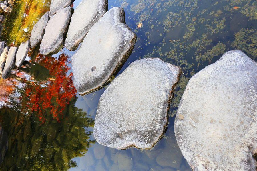2016 Autumn Beauty In Nature Bridge Ginkgo Japan Maple Nature Outdoors Park River Shadow Showa Kinen Park Stone Stone Bridge Tachikawa Tokyo Water 昭和記念公園 石橋 紅葉