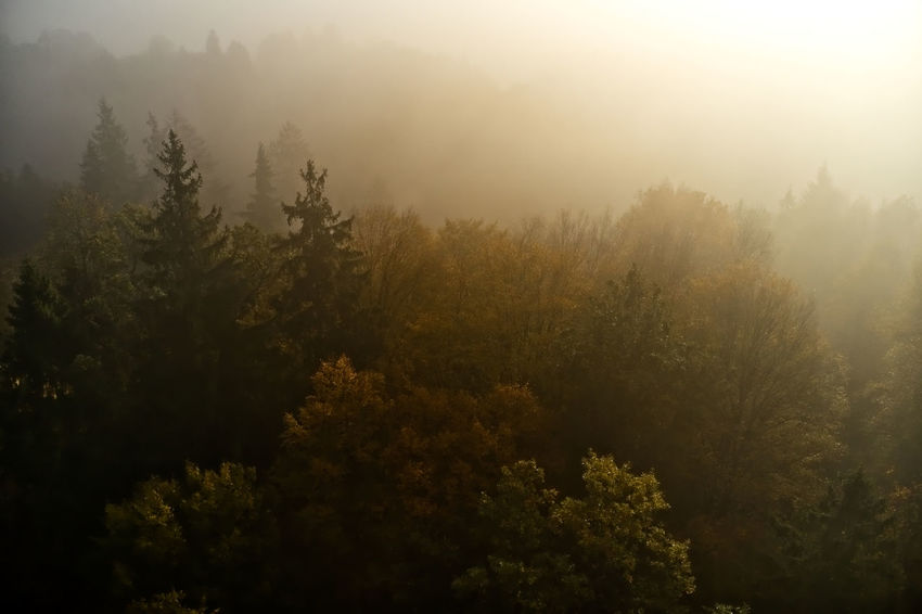 Beauty In Nature Coniferous Tree Day Environment Fog Forest Growth High Angle View Land Nature No People Non-urban Scene Outdoors Plant Scenics - Nature Sky Sunlight Tranquil Scene Tranquility Tree