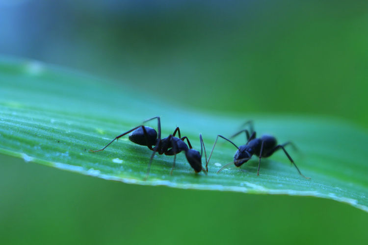 Animal Animal Themes Animal Wildlife Animals In The Wild Ant Close-up Day Green Color Insect Invertebrate Leaf Macro Nature No People One Animal Plant Plant Part Selective Focus Zoology