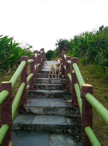 伴游狗 绿岛 taidong lvdao green island