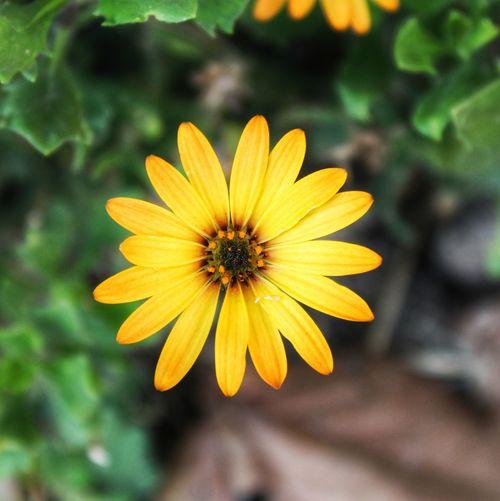 MicroSun Flower