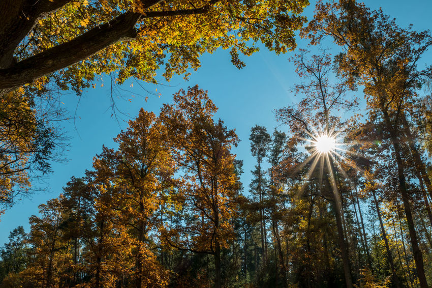 Beauty In Nature Sunlight Sky Growth Sunbeam Tree Nature Sun No People Low Angle View Outdoors Day Nature Wald Autumn Tree Freshness Plant Herbst🍁 Autumn Colors Sunlight Blatt Eyemphotography EyeEm Best Shots EyeEm Nature Lover