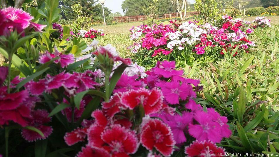 Flower Fragnance Outdoors Freshness Day Fragility Multi Colored Natur Variation