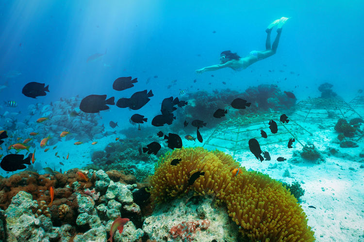Woman snorkeling in the tropical waters of the Maldives Diving Maldives Snorkeling Tropics Vacations Woman Activity Adventure Animal Themes Coral Fish Model Nature One Person Outdoors Real People Recreational Pursuit Scuba Diving Sea Sea Life Summer Swimming UnderSea Underwater Water