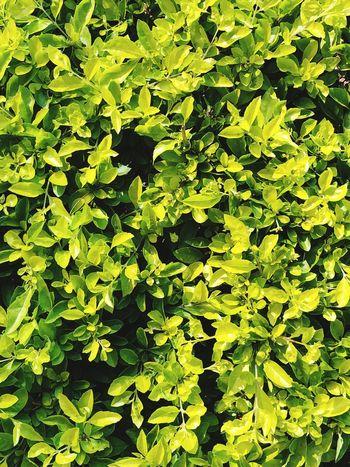 Green Color Leaf Plant Full Frame Nature Abundance Freshness Beauty In Nature