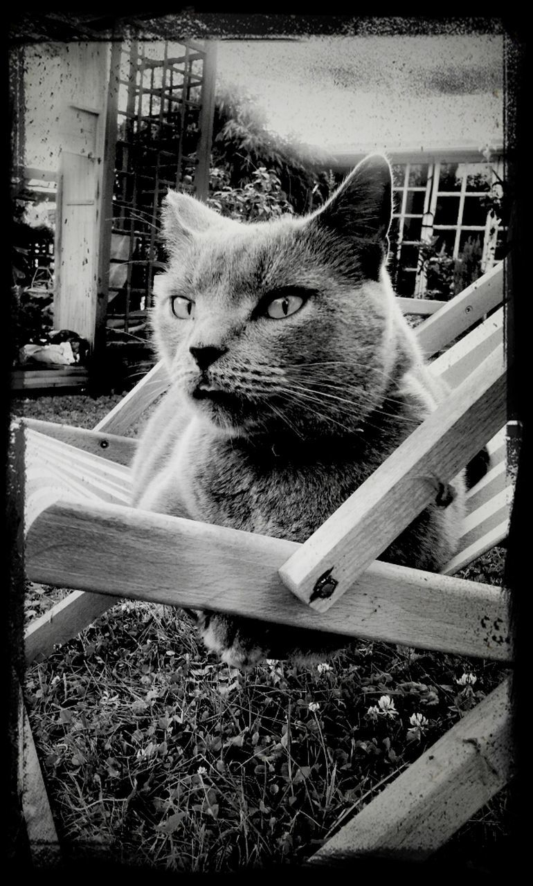 domestic cat, animal themes, mammal, domestic animals, pets, cat, one animal, feline, no people, outdoors, day