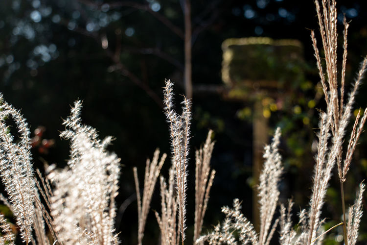 Close-up of stalks against blurred background